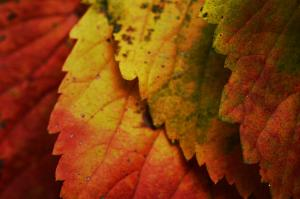 Layers of Autumn — 2013-10-03 20:46:32 — © eppbphoto.com